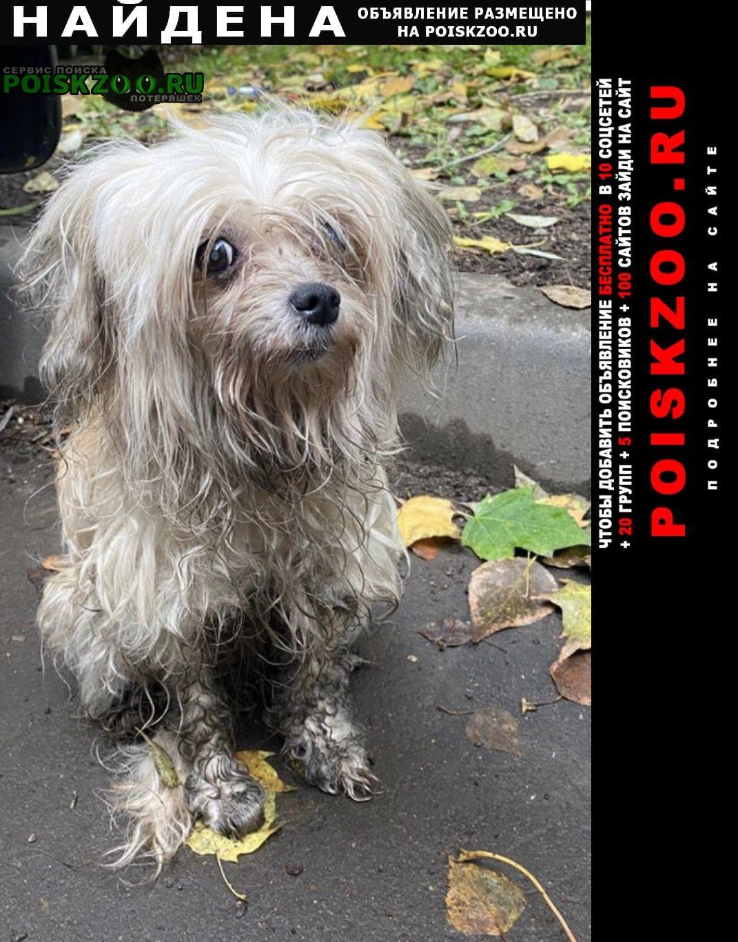 Найдена собака в районе коптево Москва
