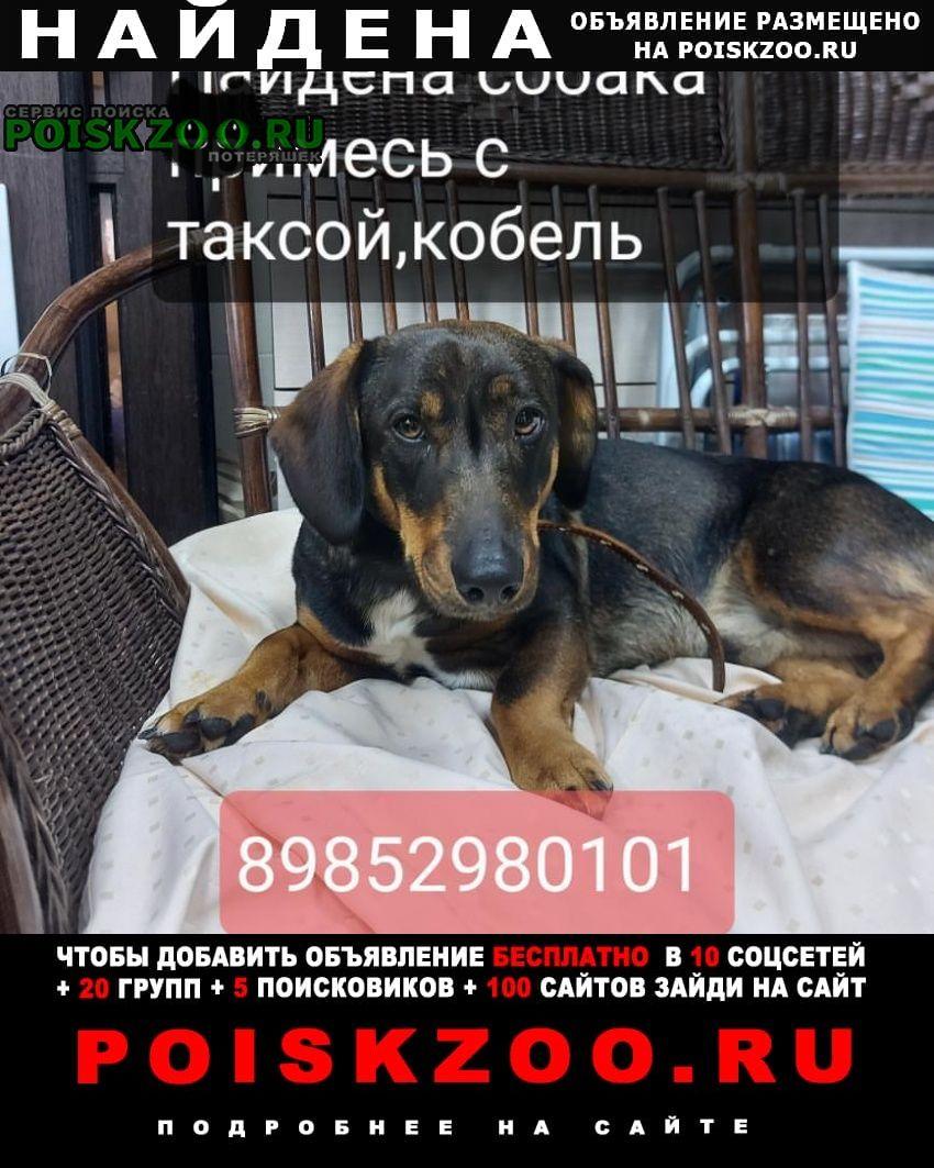Найдена собака кобель Ступино