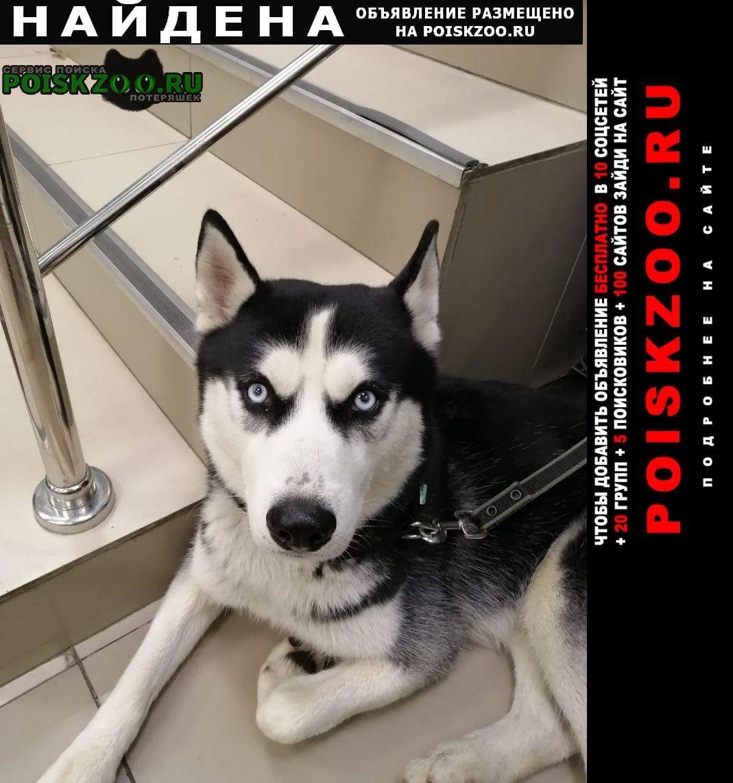 Найдена собака кобель хаски. Москва