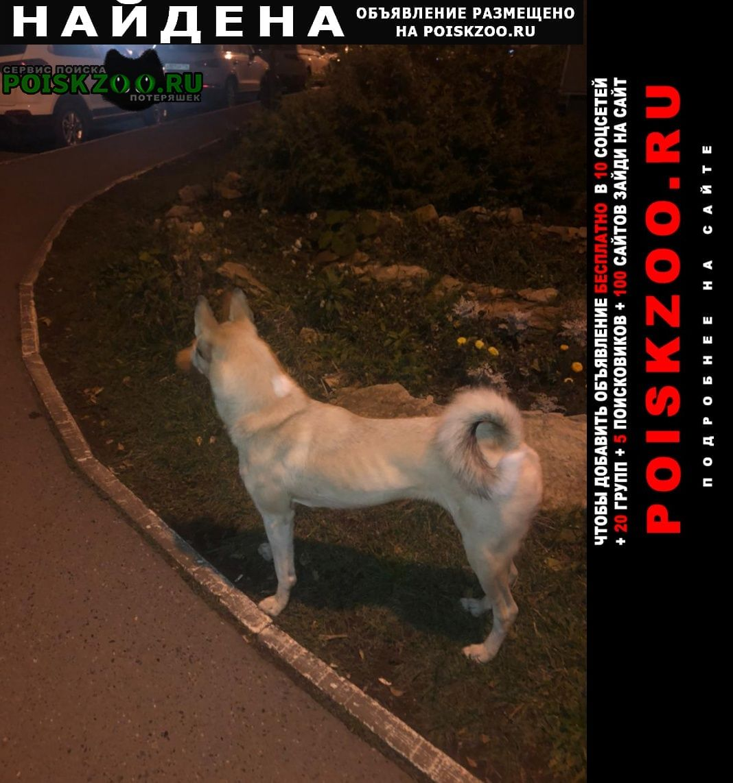 Найдена собака похожа на лайку, бежевого цвета Казань