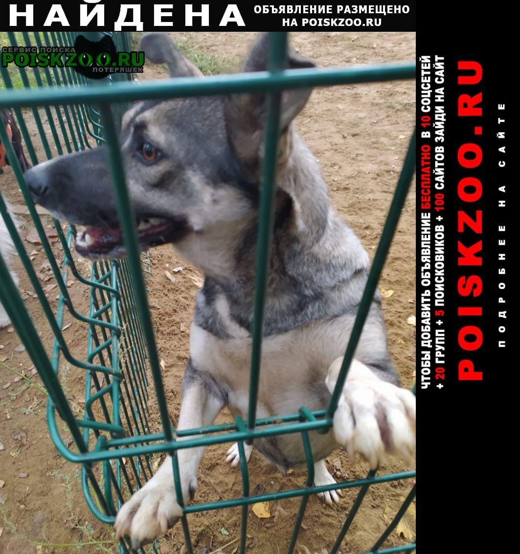 Найдена собака 30 сентября на базовской улице (север) Москва