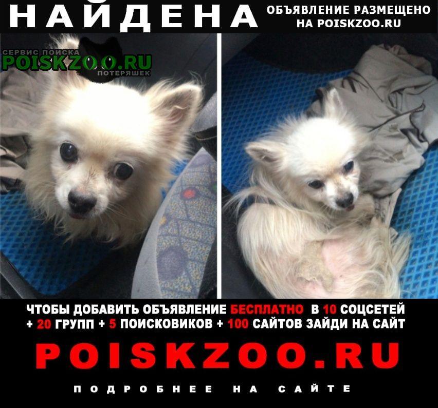 Найдена собака кобель чихуахуа Нарофоминск