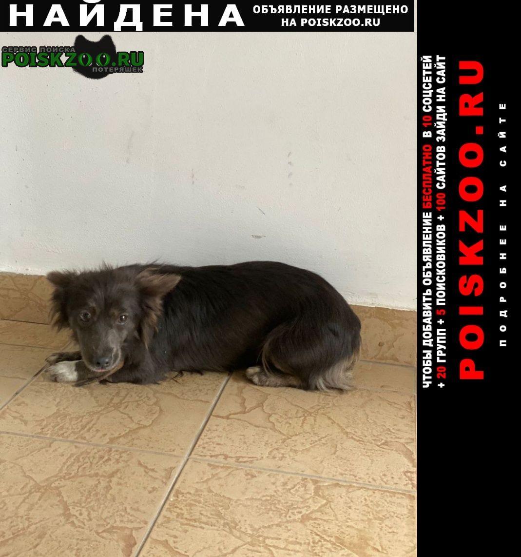 Найдена собака каштановый окрас, некрупная с ошейником Краснодар
