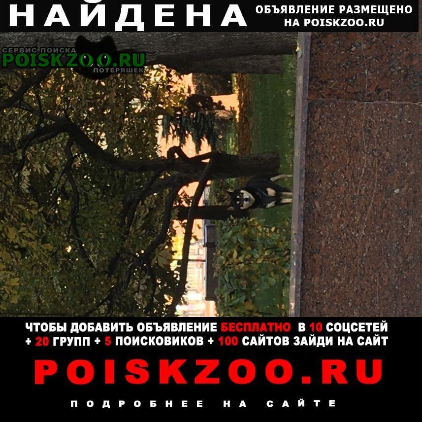 Найдена собака но не поймана Москва