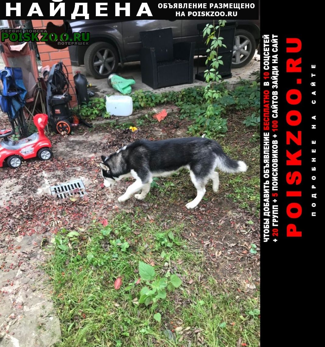 Найдена собака кобель щенок хаски, дер пешково Ногинск