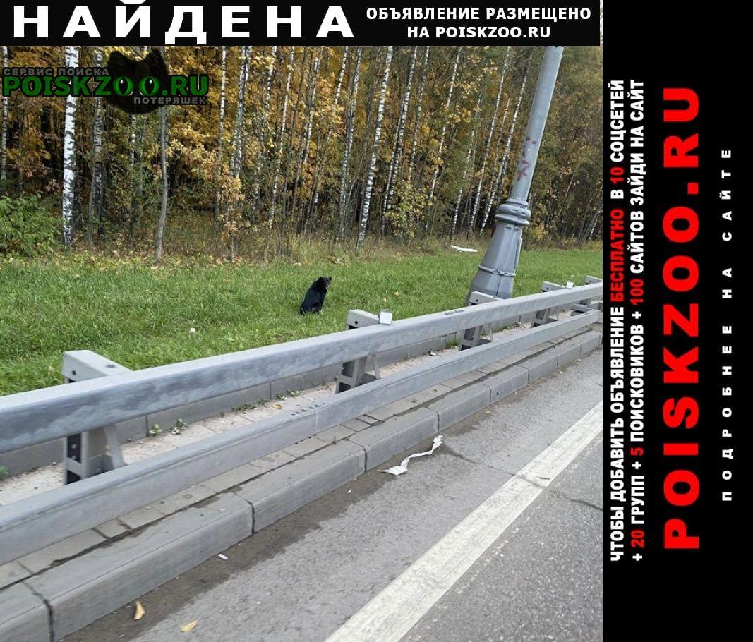 Найдена собака, но не поймана Москва