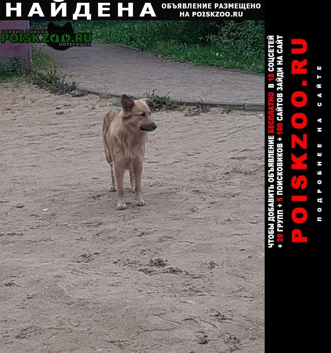Найдена собака замечена возле черного озера Зеленоград