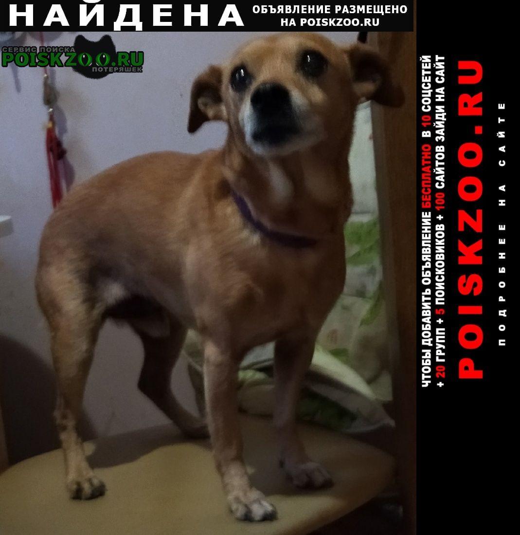 Найдена собака кобель королёв мо Королёв (Юбилейный) (Московская обл.)