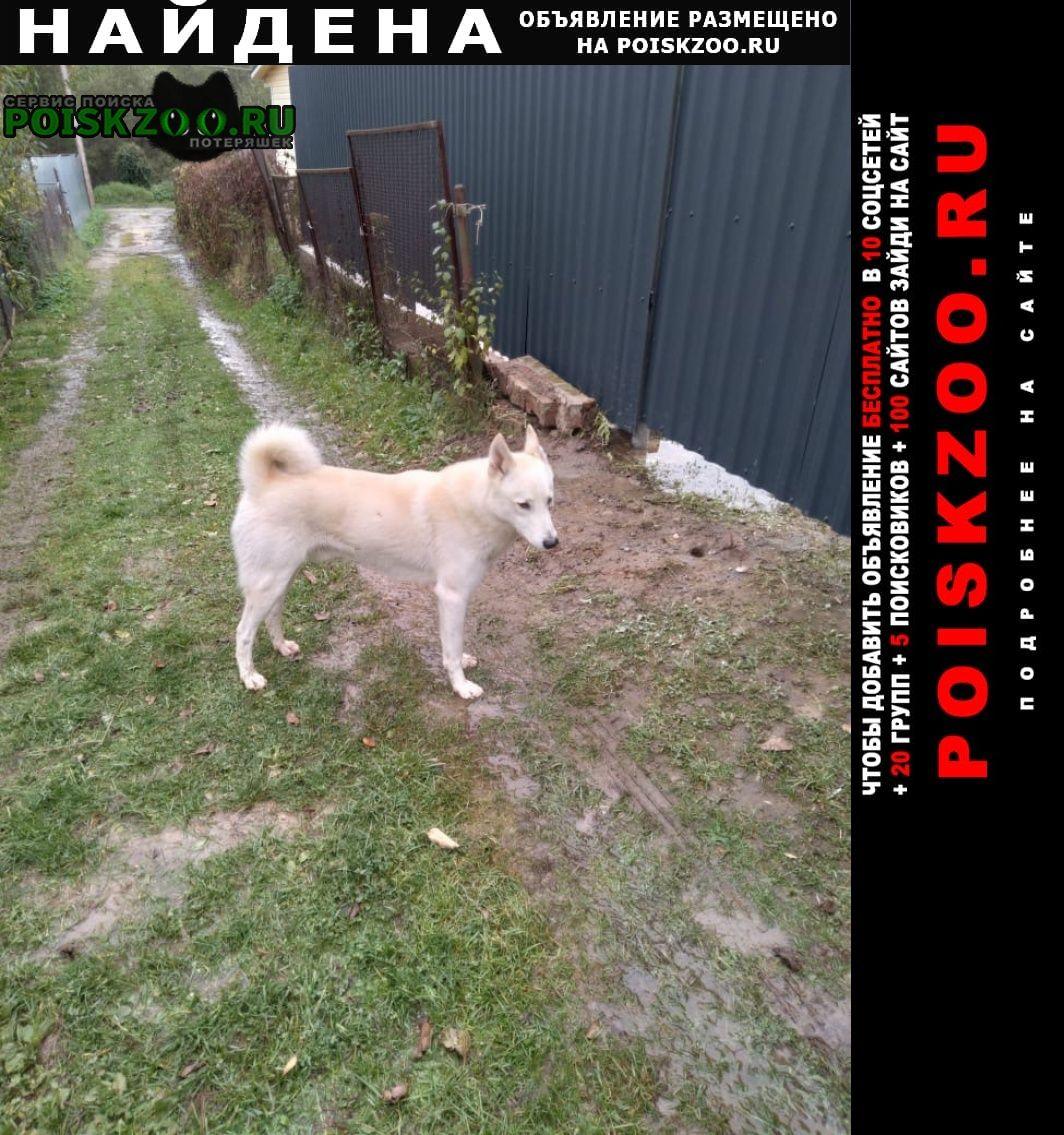 Найдена собака кобель Истра