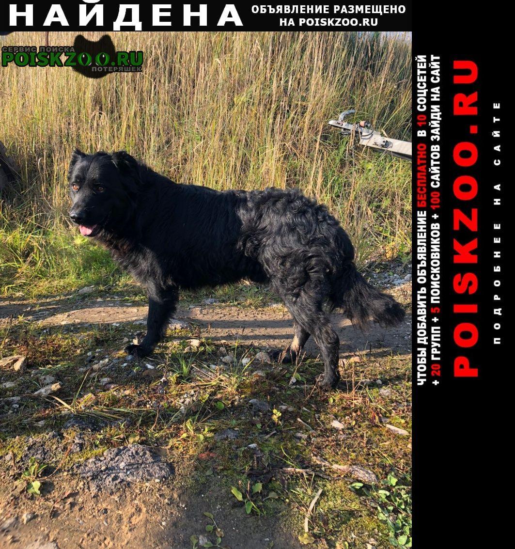Найдена собака кобель молодой Солнечногорск