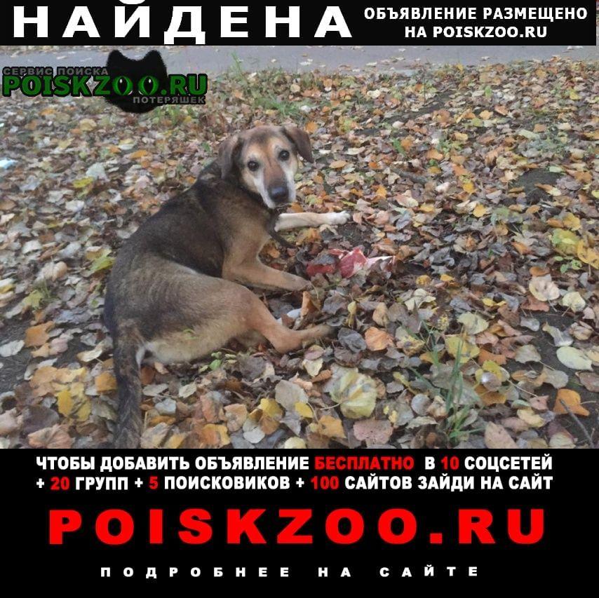 Найдена собака Домодедово