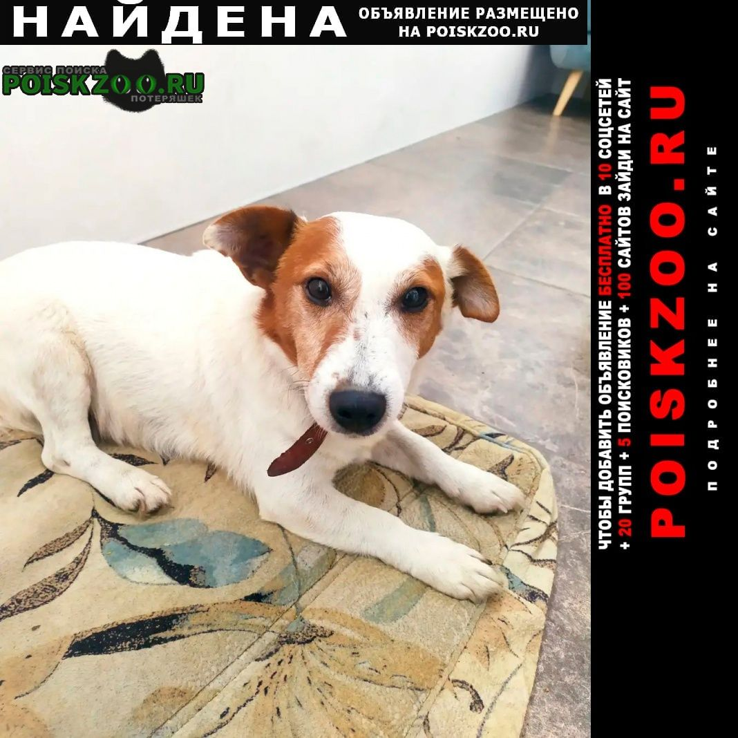 Найдена собака кобель Рязань