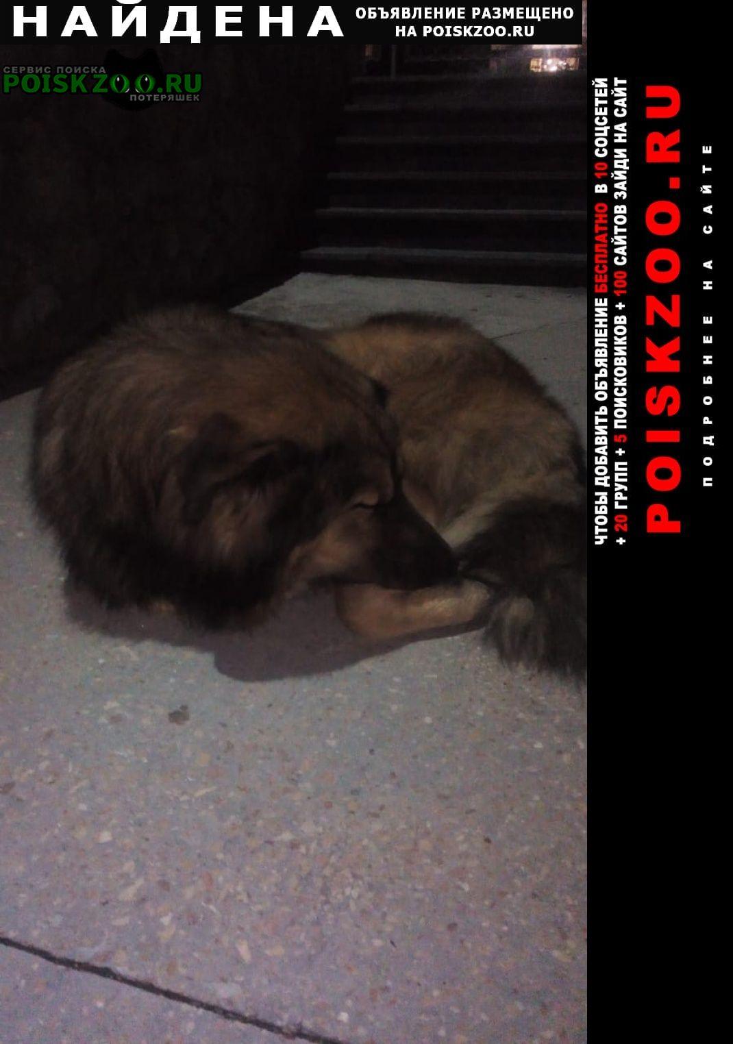 Найдена собака кобель похож на леонбергера Севастополь