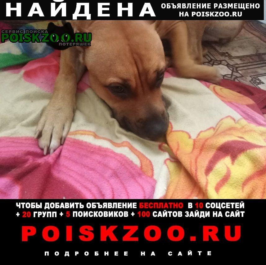 Найдена собака Витебск