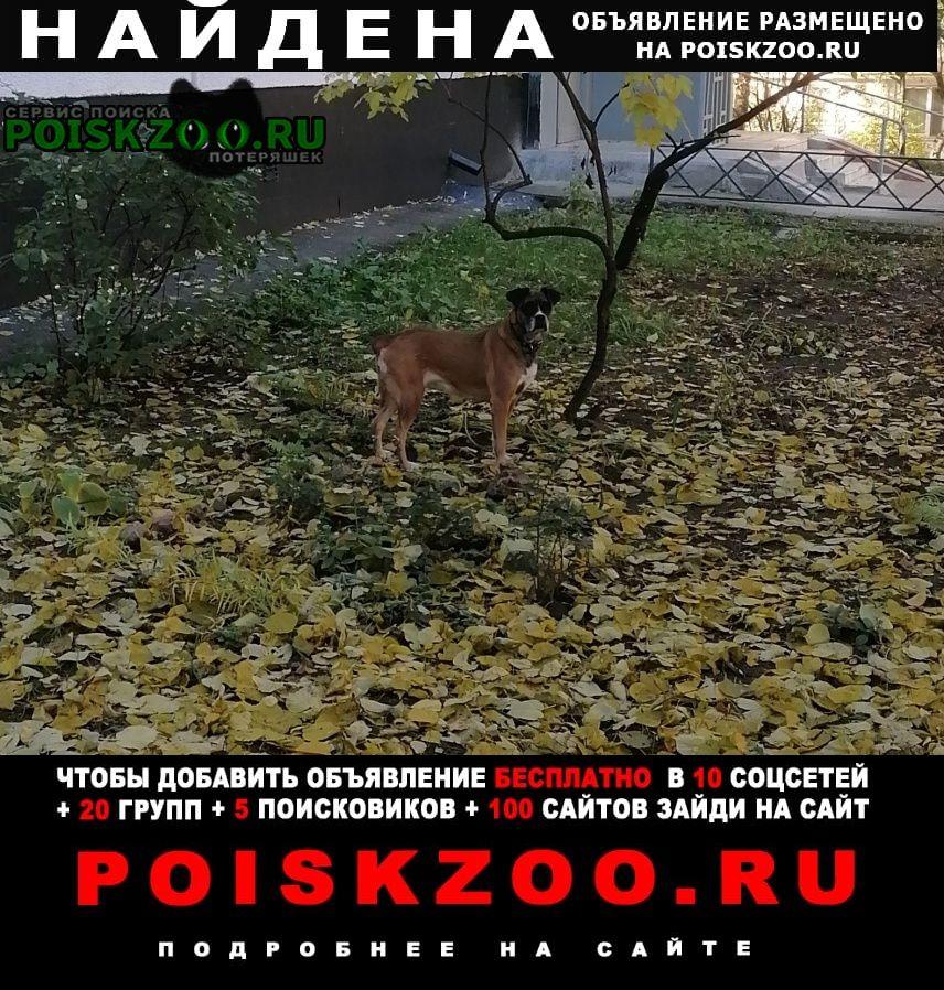 Найдена собака метро чертановская Москва