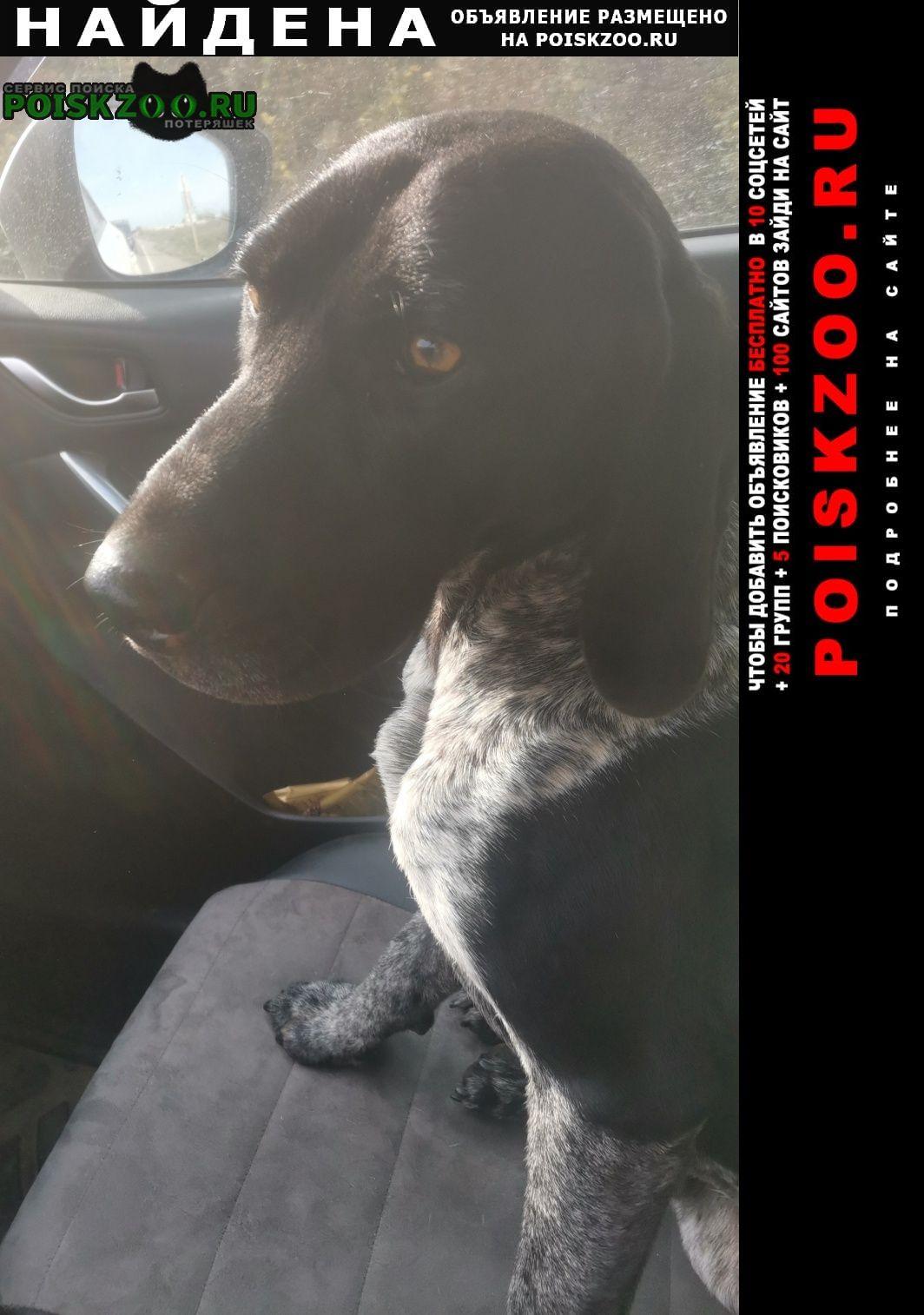 Найдена собака кобель на охоте в районе шапсугского водохранил Краснодар