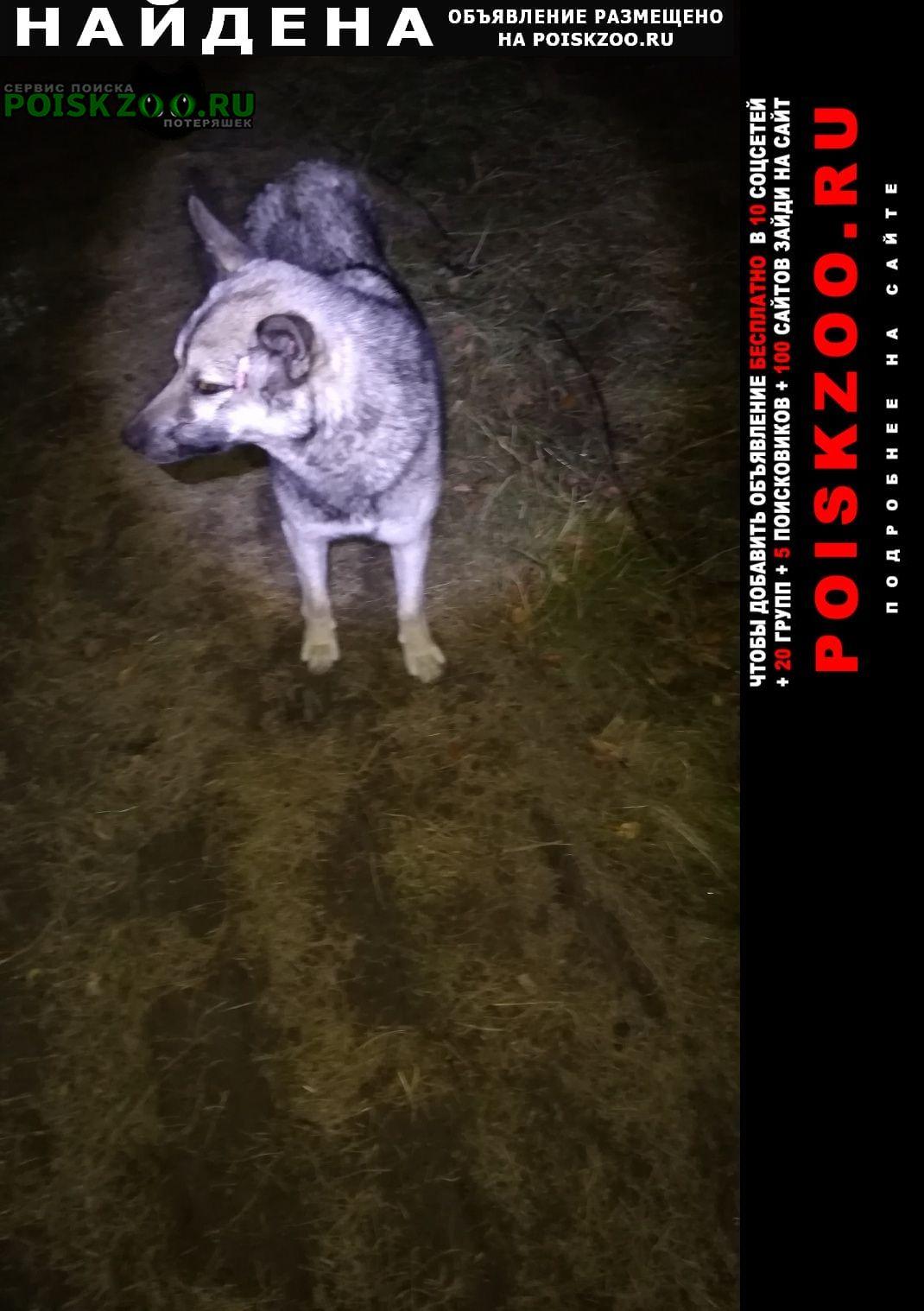 Ханты-Мансийск Найдена собака кобель ищет хозяина
