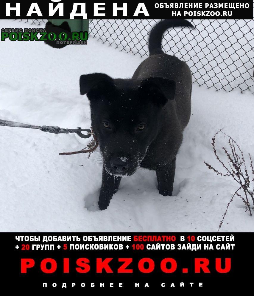 Найдена собака Звенигород