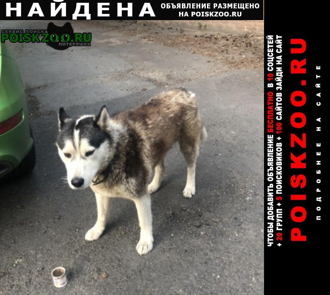 Найдена собака кобель хаски (рыжий), в ошейнике Королев