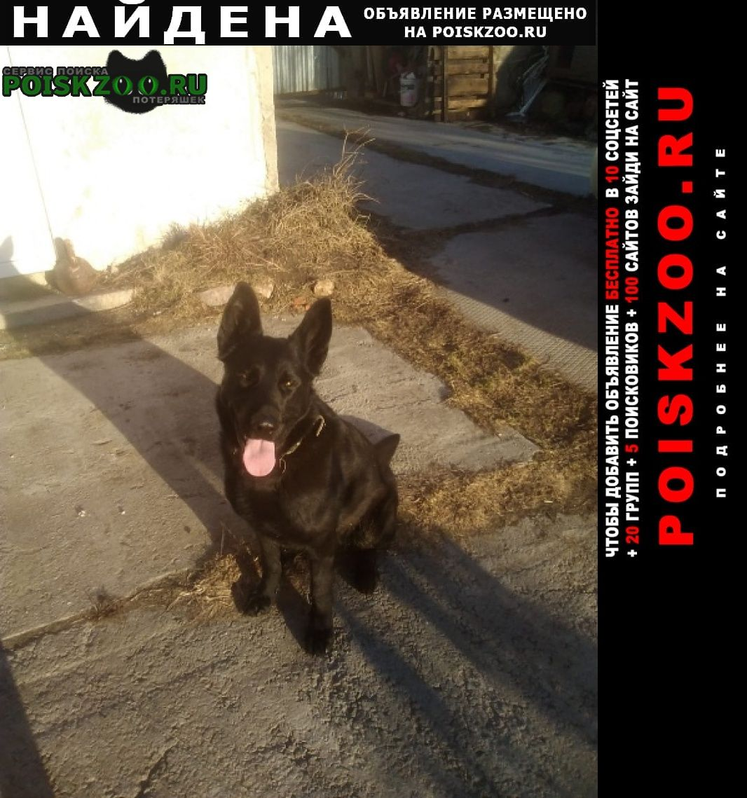 Найдена собака кобель чёрная овчарка в химках Химки