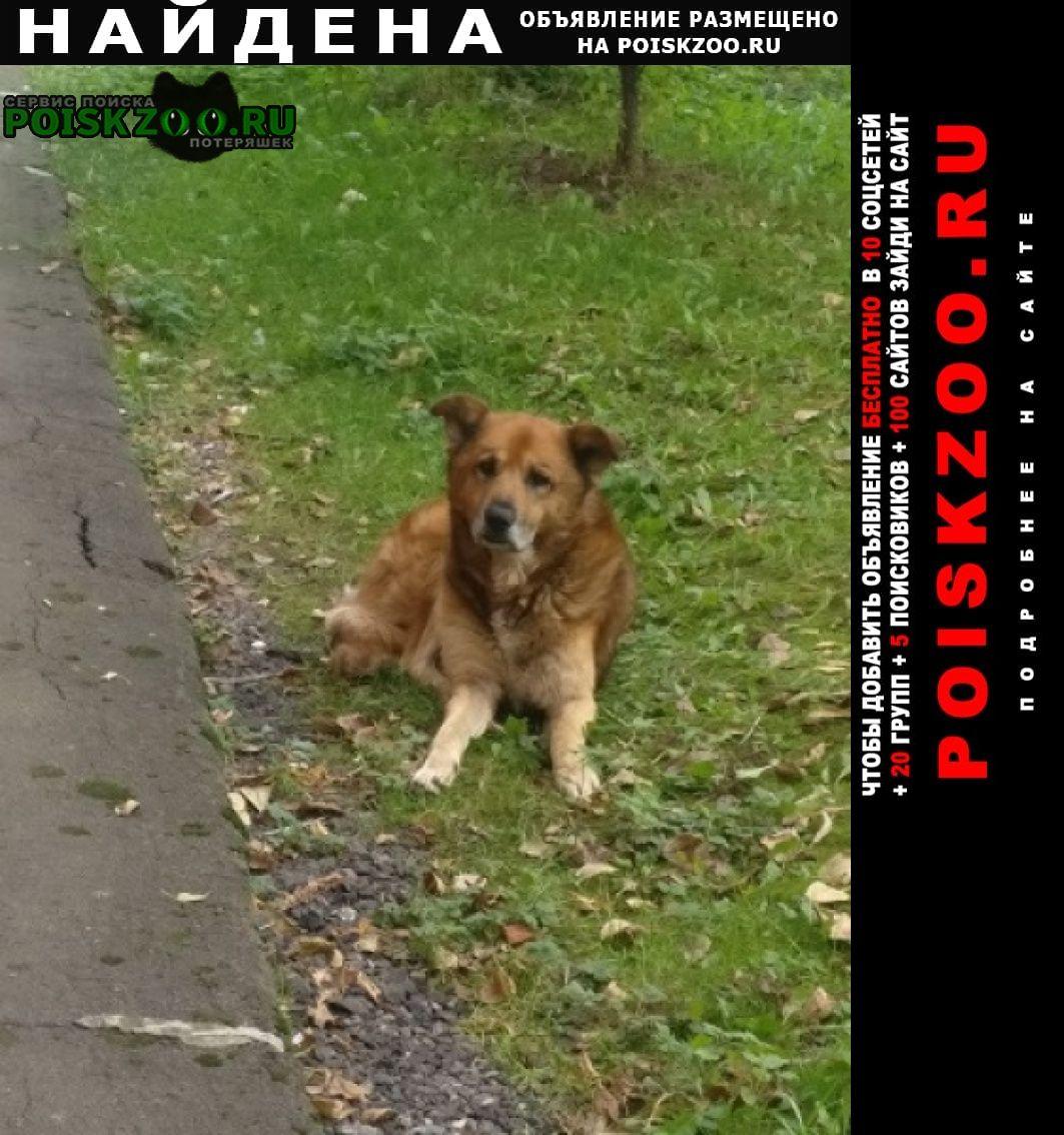 Найдена собака кобель Реутов