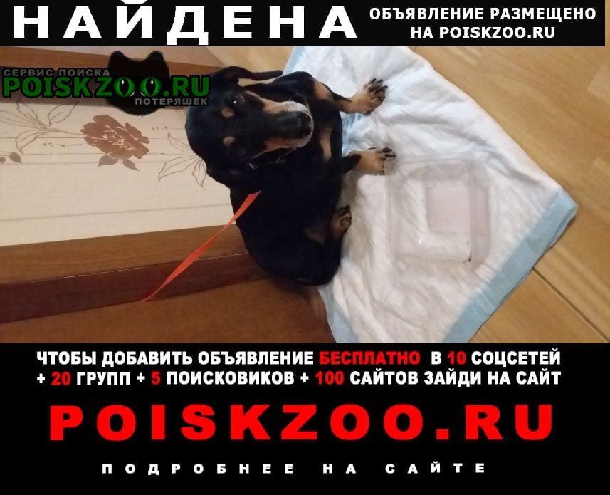 Найдена собака хозяин отзовись Судак