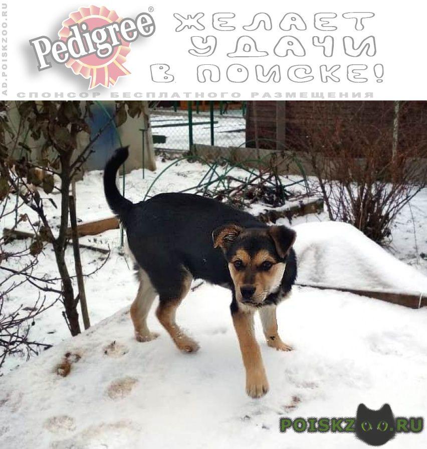 Найдена собака кобель г.Александров