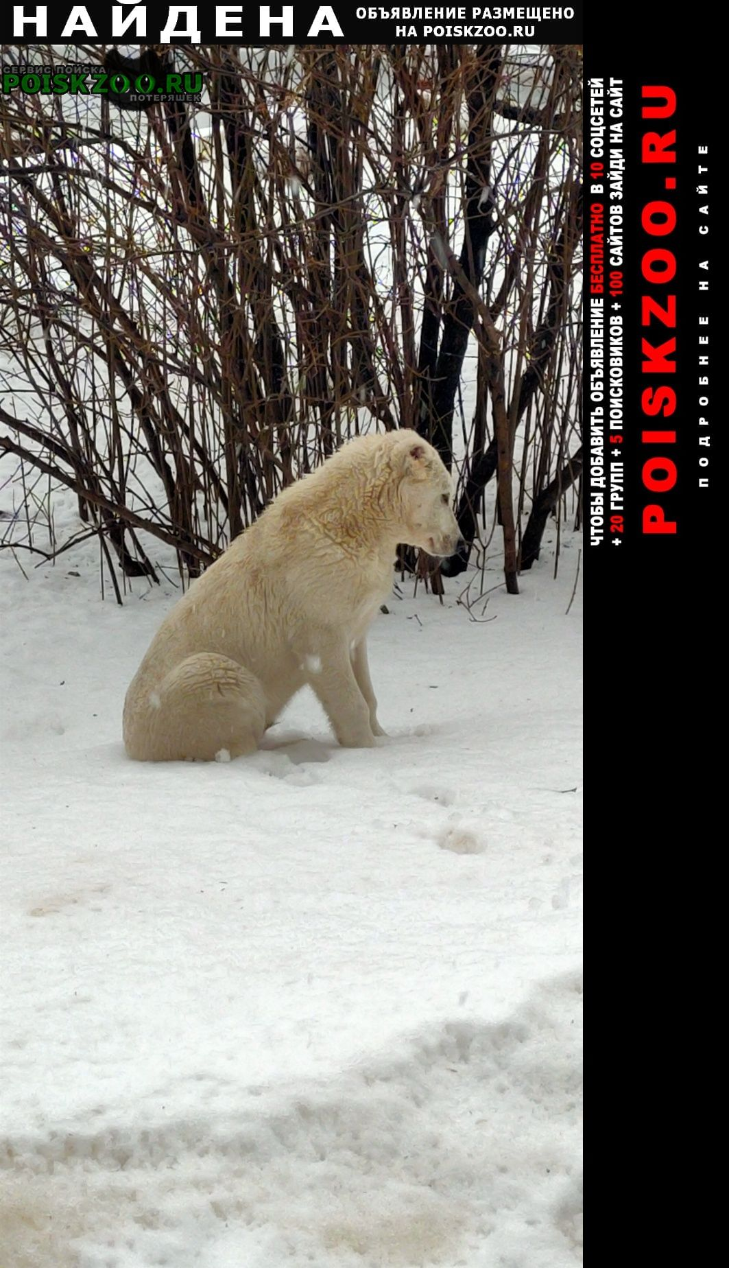 Найдена собака алабаи Нижний Новгород