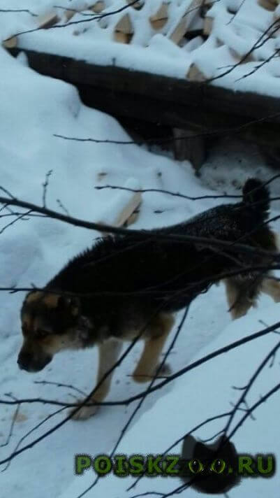 Найдена собака кобель пес г.Екатеринбург