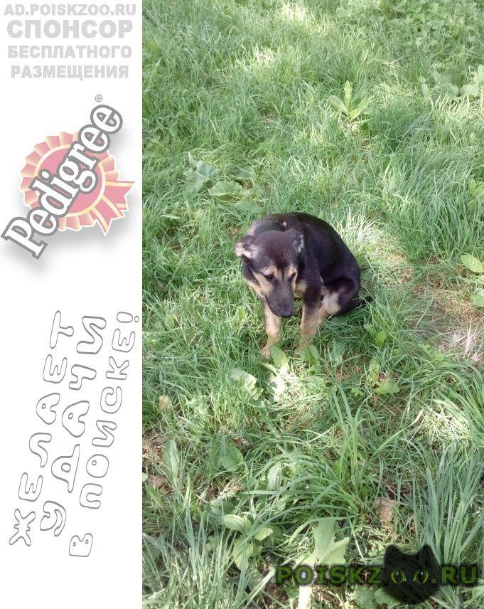 Найдена собака, южный г.Подольск
