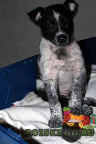 Найдена собака кобель мальчик 1, 5 месяца г.Нижний Новгород