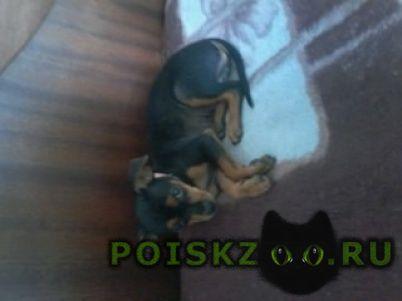 Найдена собака щенок г.Анапа