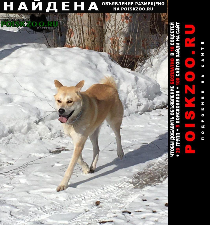 Найдена собака потеряшка в сонино Тучково