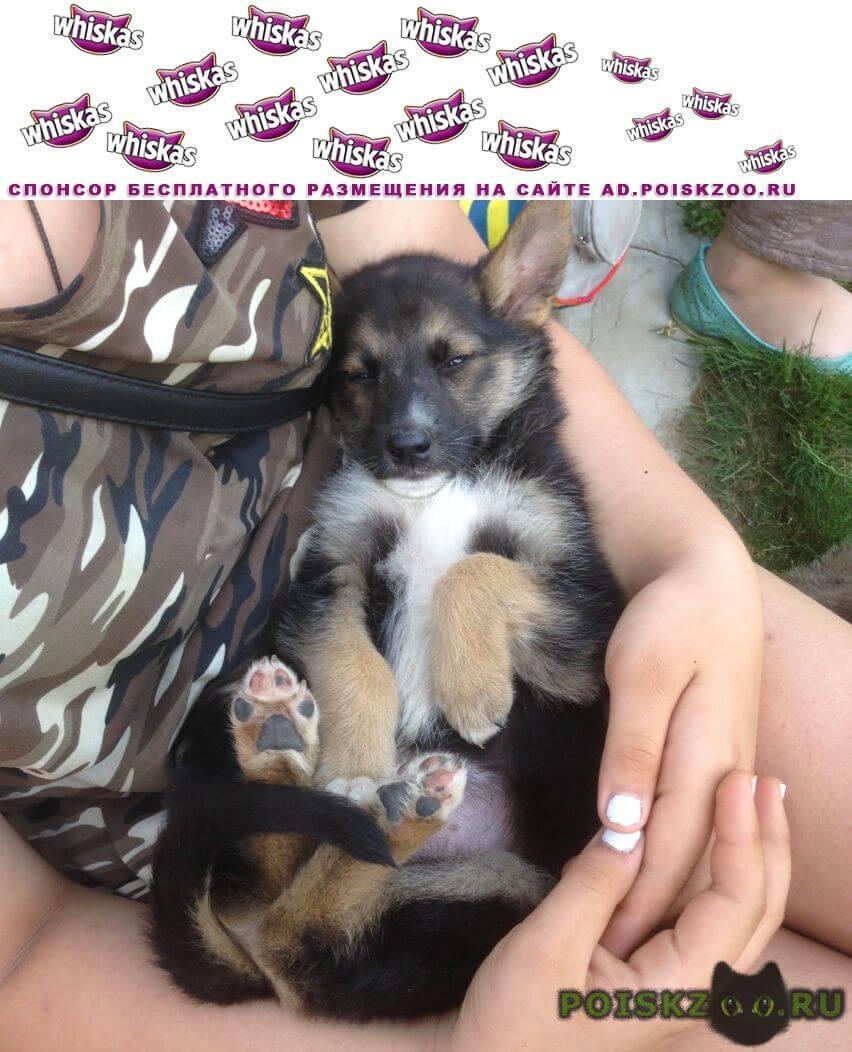 Найдена собака кобель вытащили из забора 3-х щенков метисы г.Пушкино