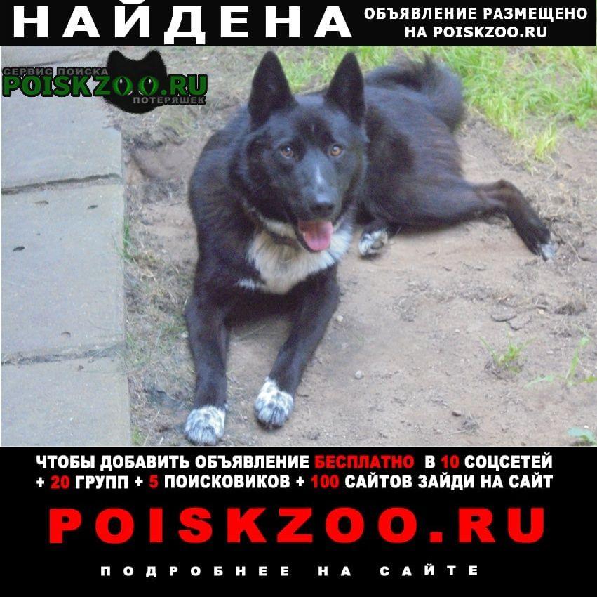 Найдена собака кобель между деревнями пашуково и воскресенско Ногинск