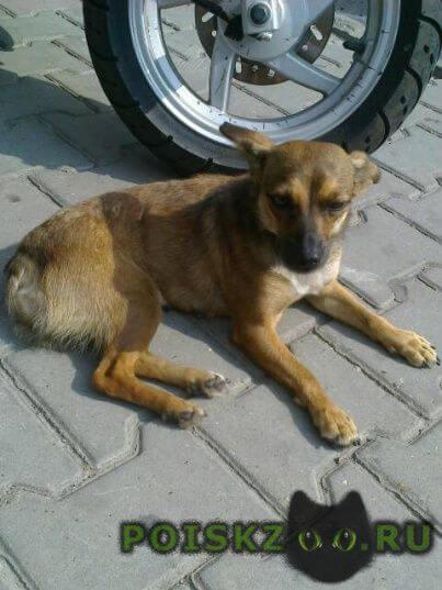 Найдена собака в районе театральной площади г.Ростов-на-Дону