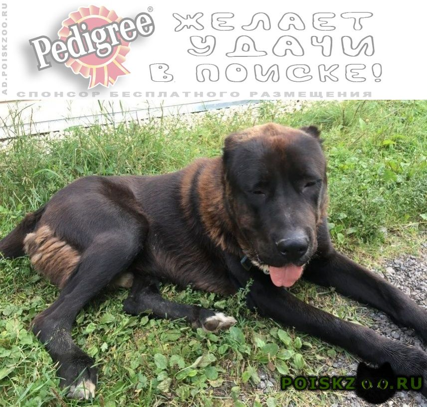 Найдена собака кобель г.Щелково