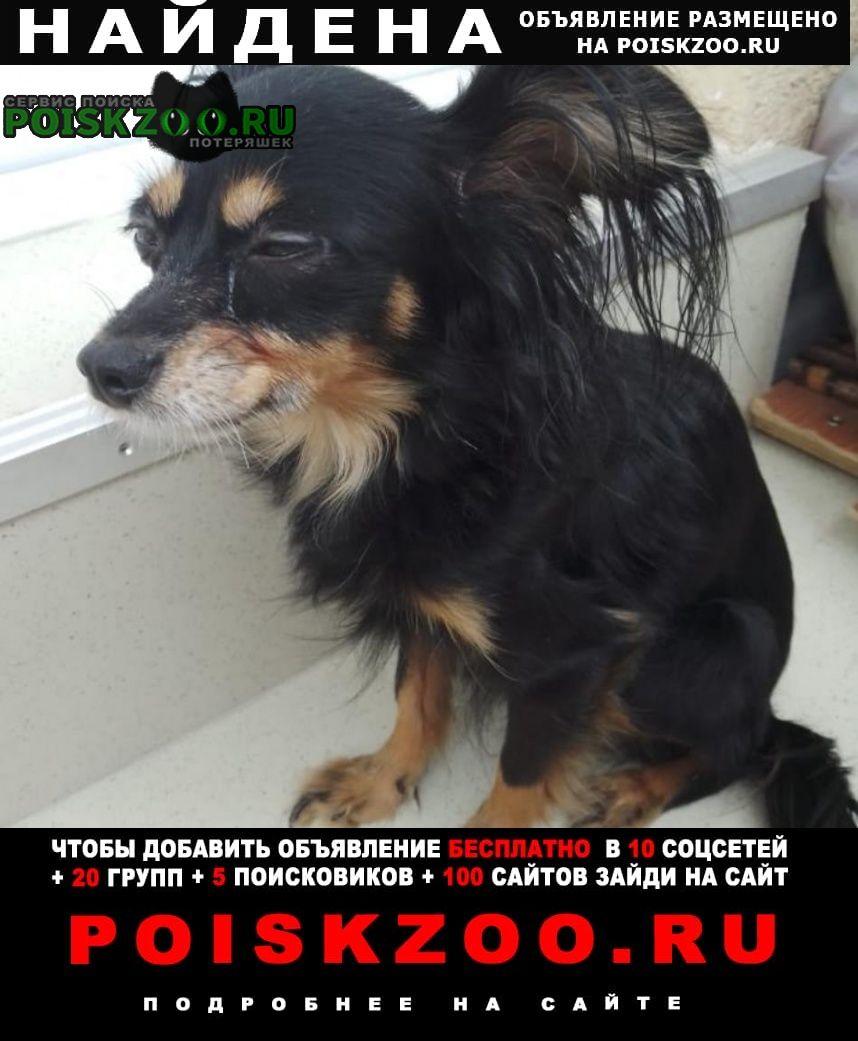 Найдена собака хозяин отзовись рыдает Санкт-Петербург