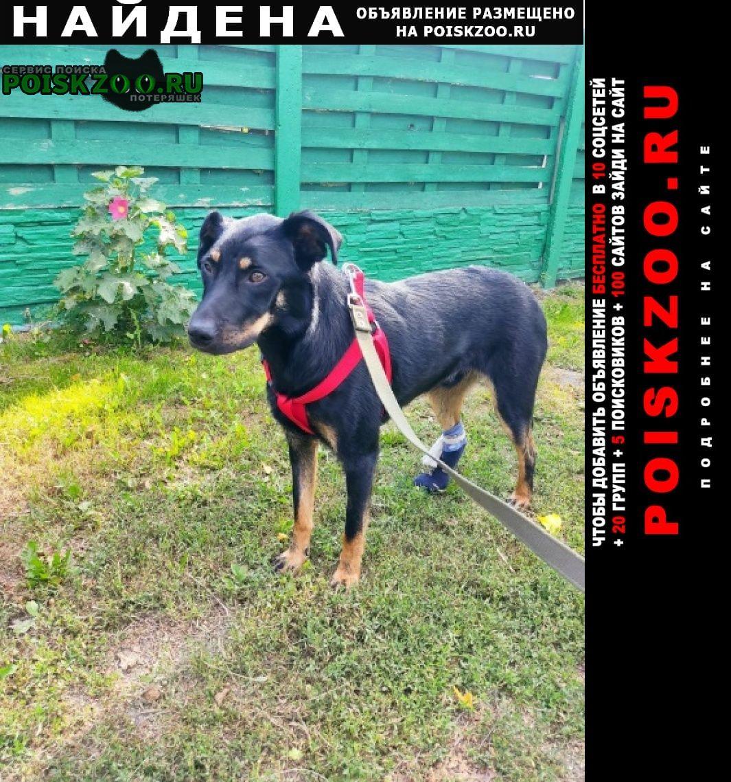 Найдена собака кобель спасён пёс.ищем хозяина. Бобруйск