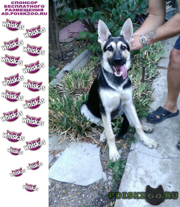 Найдена собака г.Ялта
