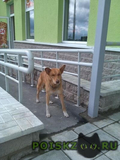 Найдена собака кобель спб, жк новая охта г.Санкт-Петербург