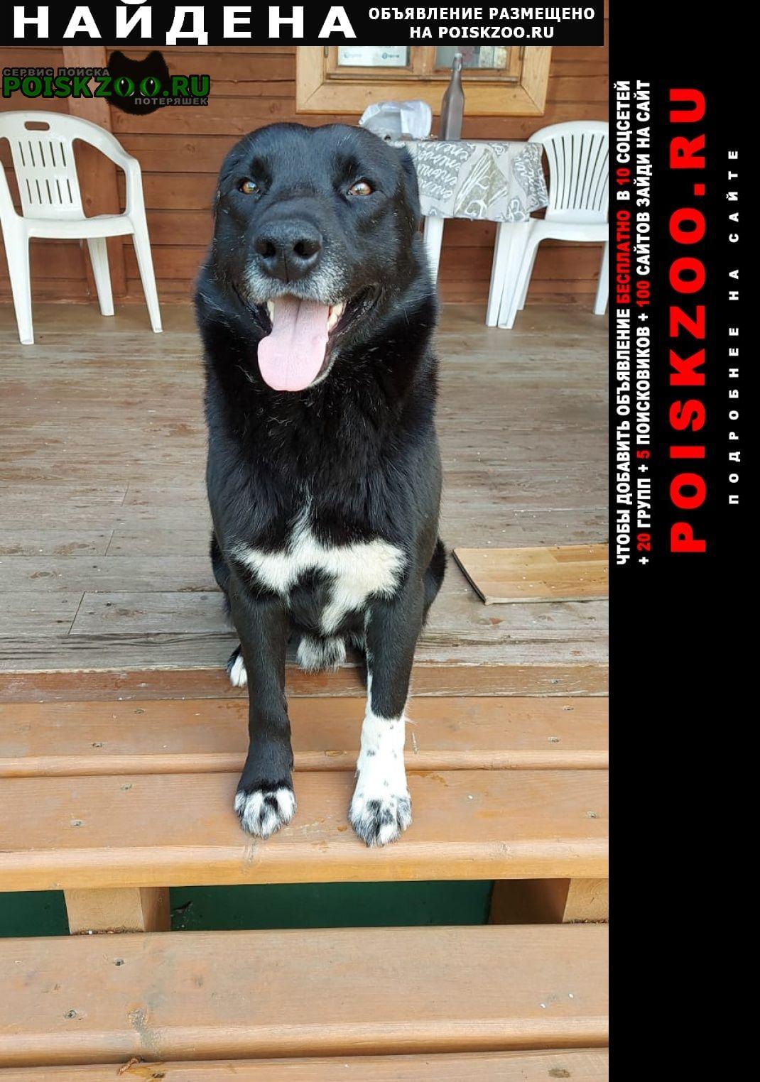 Найдена собака кобель Ярославль