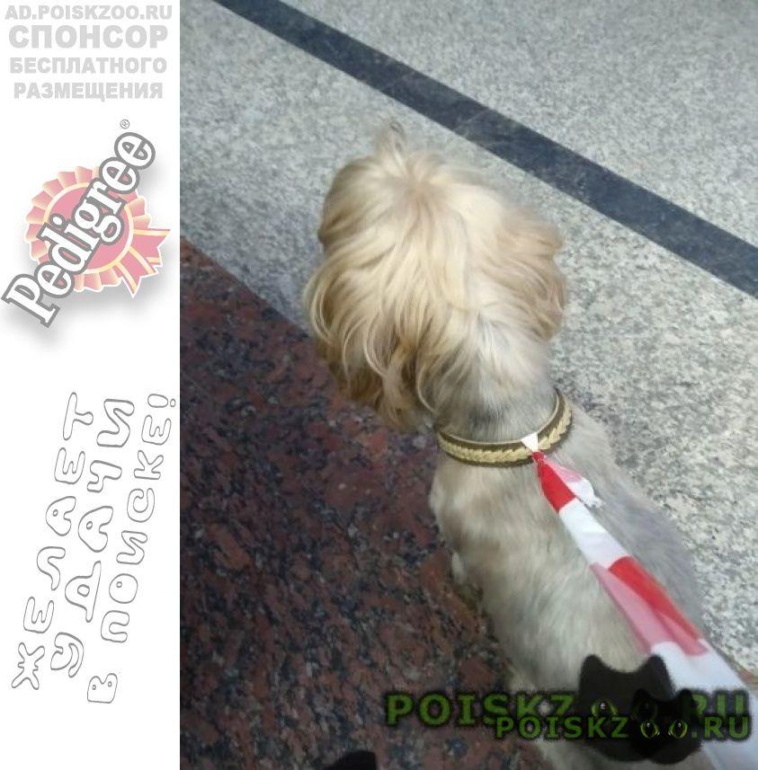 Найдена собака кобель йокширский терьер г.Москва