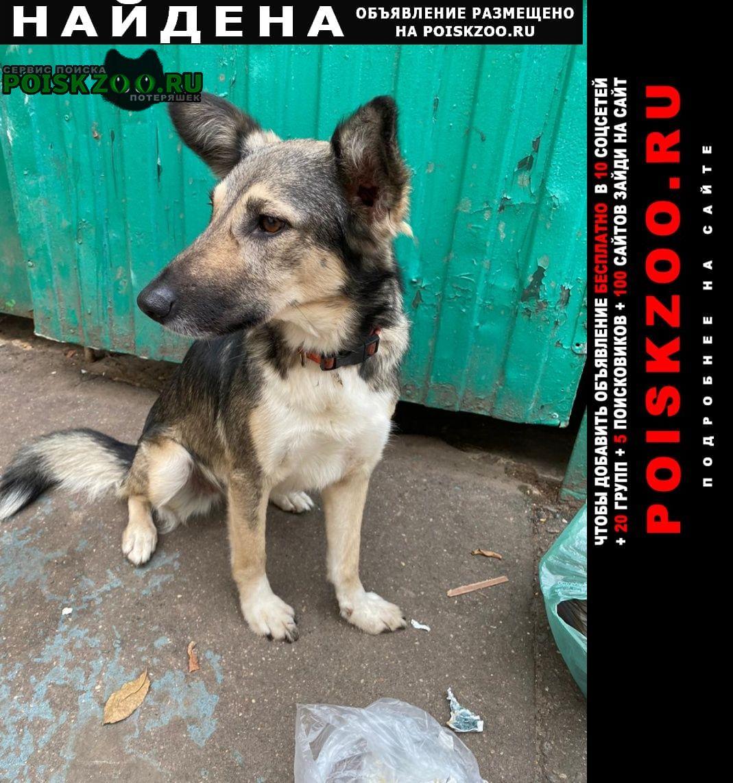 Найдена собака в покровское-стрешнево ул свободы Москва