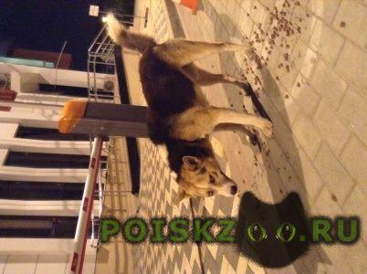 Найдена собака кобель г.Краснодар