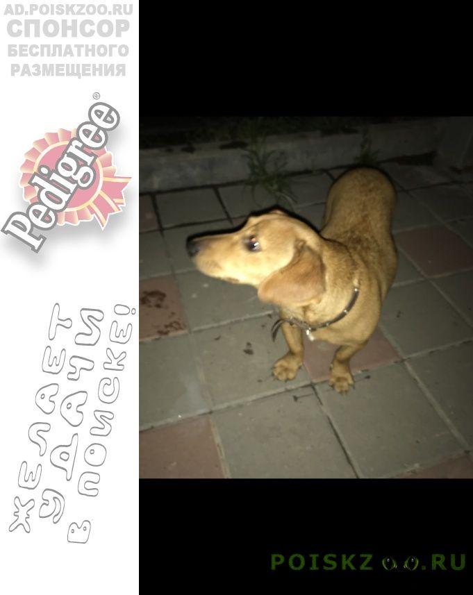 Найдена собака г.Адлер