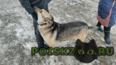 Найдена собака кобель на станции катуар бродила чья-то собака, г.Лобня