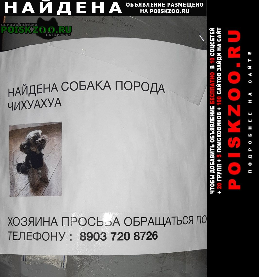 Найдена собака маленькая собачка. Москва