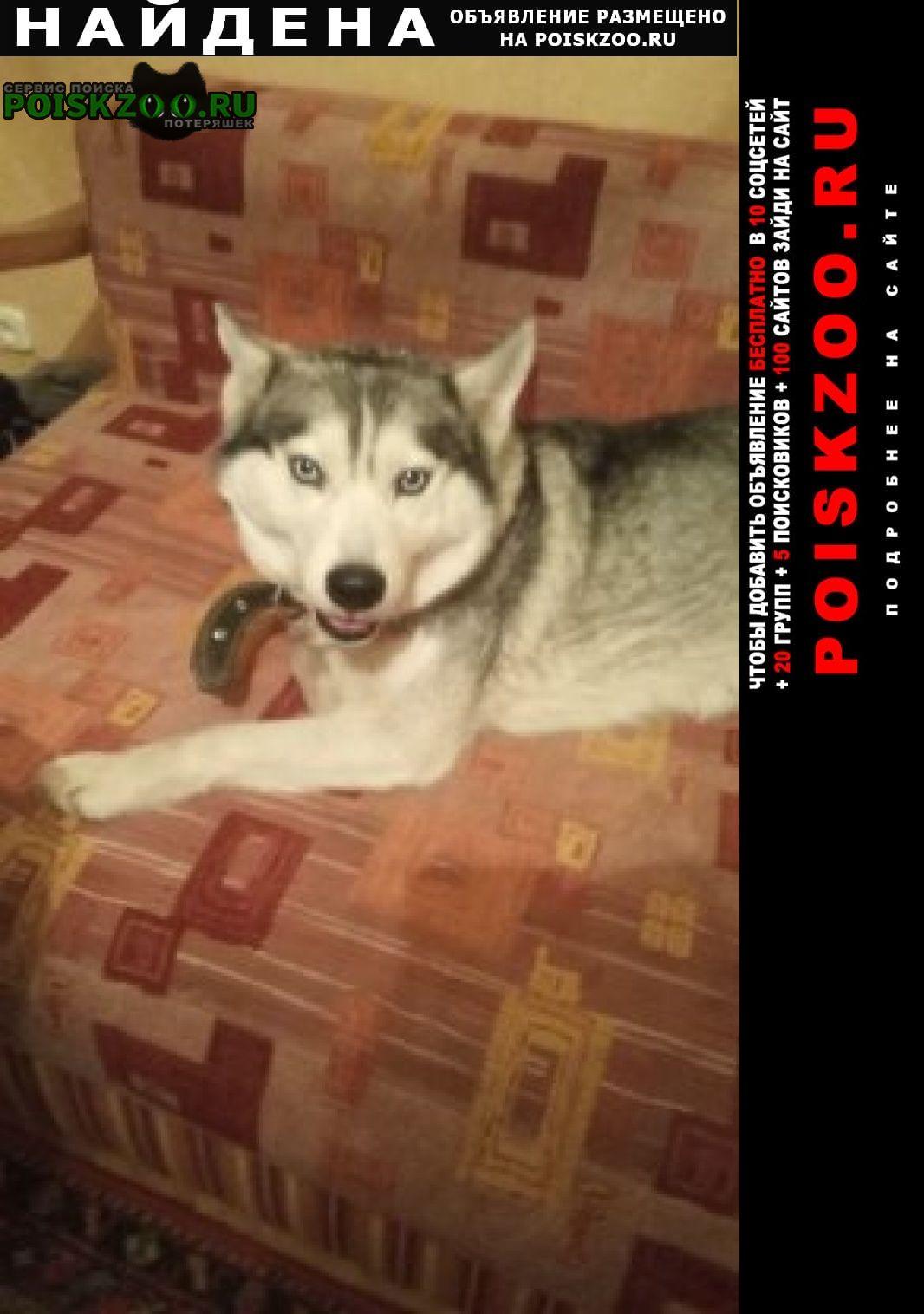 Найдена собака Пятигорск