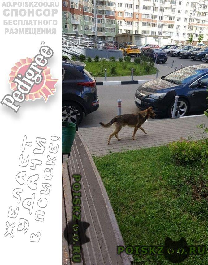 Найдена собака кобель autotitle г.Реутов